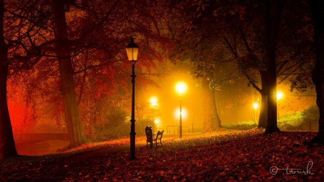 night-autumn-park-lamps-light-twilight-bridge-bench-lamps-tree-autumn